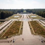 Malades, les buis de Vaux-le-Vicomte vont être arrachés