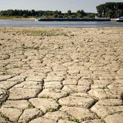Canicule : l'Europe étouffe sous la chaleur