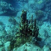 La haute mer, enjeu crucial d'une négociation planétaire