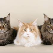 Pourquoi a-t-on un «chat dans la gorge» ?