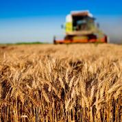 La canicule fait flamber le cours du blé en Bourse