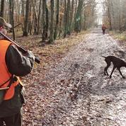Le prix du permis de chasse divisé par deux