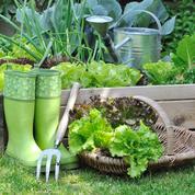 Par ici la bonne salade !