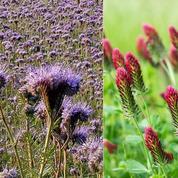 «Engrais verts»: ces plantes qui améliorent la terre