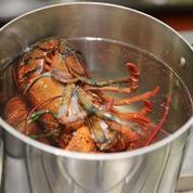 États-Unis : un restaurant enfume ses homards au cannabis avant de les cuire