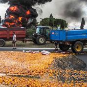 Emplois saisonniers : les agriculteurs contestent la fin de l'exonération de charges patronales