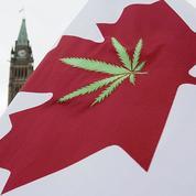 Au Canada, les entreprises embauchent des goûteurs de cannabis