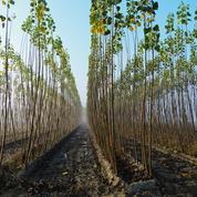 Planter des arbres, capturer et stocker le CO2... Les projets pour limiter l'effet de serre