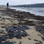 Les plages du Var souillées par des boulettes de pétrole