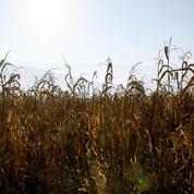 Avec cette sécheresse qui dure, l'État vient en aide aux agriculteurs