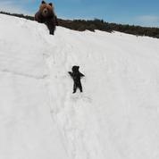 Derrière la vidéo de cet ourson si mignon, un drone très dérangeant