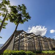 Les entrepreneurs réunionnais rayonnent loin de leur île