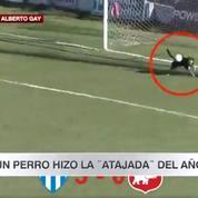 L'arrêt d'un chien pour empêcher un but dans un match de football en Argentine