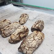 Avec cette machine, un boulanger transforme son pain sec en farine
