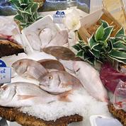 86% des poissons vendus en grande surface proviennent de pêche non durable