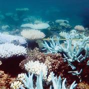 Coraux, poissons… Les espèces migrent avec le réchauffement climatique