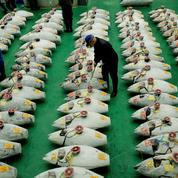 Le nouveau marché aux poissons de Tokyo démarre sur une enchère record