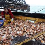Un tiers des espèces de poissons toujours victimes de la surpêche en France