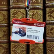 La chauve-souris Merlin joue au rat de bibliothèque en Angleterre