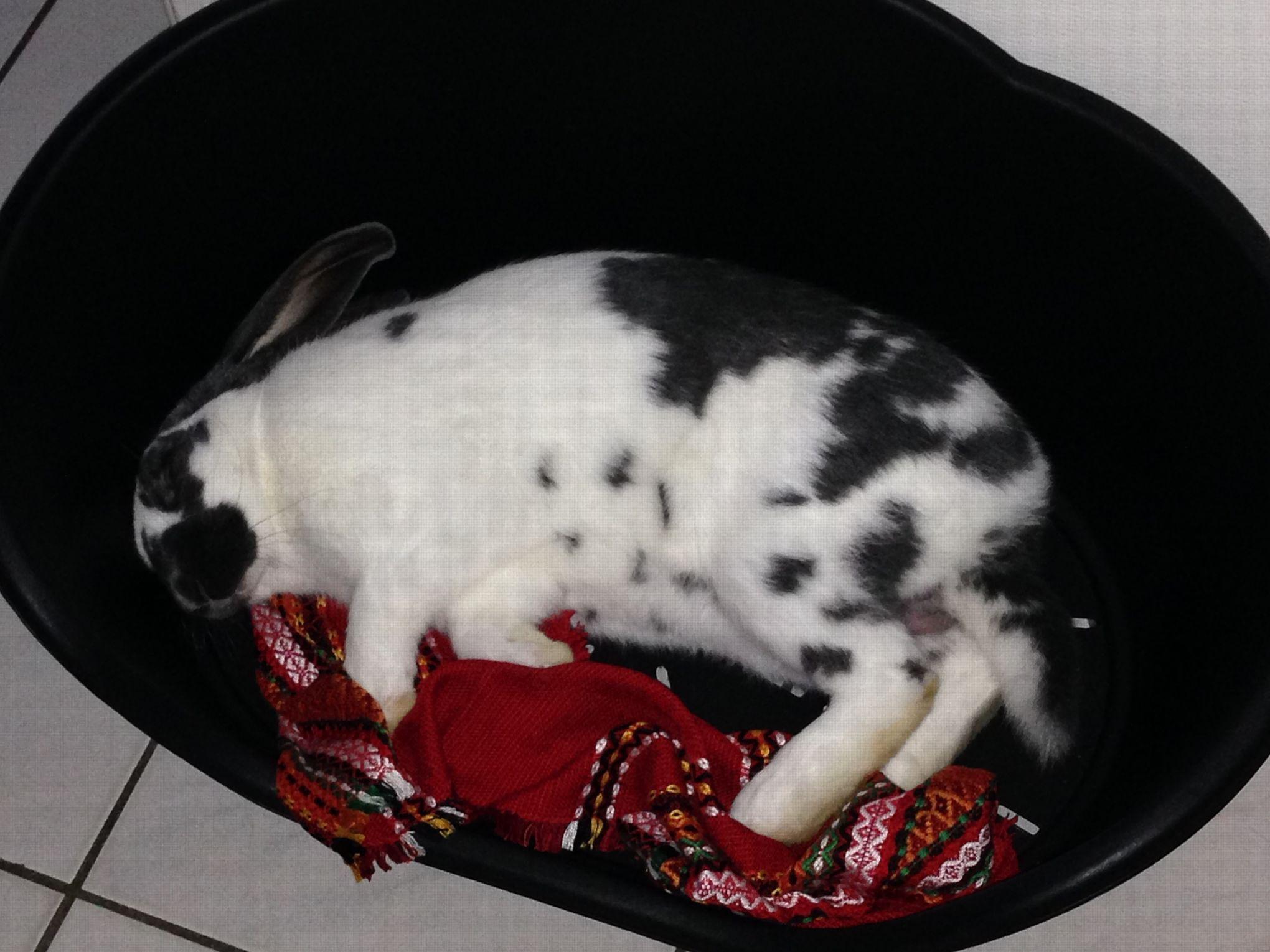Comment lever de vrais lapins de ferme - Comment couper les griffes d un lapin ...