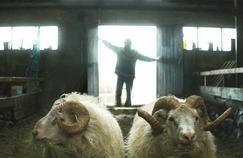 Le film Béliers de Grimur Hakonarson a reçu ce samedi le prix Un Certain Regard.