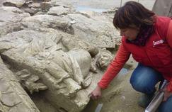 L'institut national de recherches archéologiques préventives (INRAP) a réalisé en 2014 quelque 1668 diagnostics et 222 fouilles.