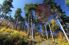 La forêt bénéficie d'une exonération à hauteur de 75% pour les droits de succession et de donation si certaines conditions sont respectées (engagement de gestion durable sur 30ans).