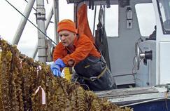 Bren Smith cultivant du fucus dans le Connecticut.