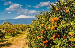 En Sicile, sous le soleil des agrumes