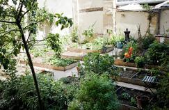 Le jardin communautaire intérieur du Marché des Enfants Rouges à Paris.