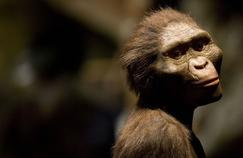 Reproduction de Lucy au Musée des Sciences Naturelles de Houston.