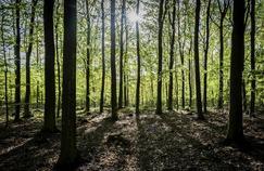 Une forêt au printemps source de biodiversité.