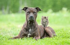 On compte 63 millions d'animaux de compagnie en France.