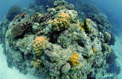 La Grande barrière de corail abrite environ 400 espèces de coraux et 1500 espèces de poissons.