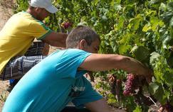 «Avec 60.000 personnes, la viticulture bio compte pour environ 11% des emplois de la viticulture française, alors qu'elle représente quelque 5% du nombre d'exploitations», explique le chercheur Louis-Antoine Saïsset.