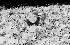 Si les feuilles mortes font la joie des enfants, elles sont aussi un casse-tête pour les services de nettoiement de la voirie.