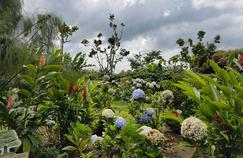 Une nature luxuriante posée au pied des volcans.