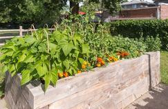 Le potager surélevé permet de compenser le manque de surface disponible ou une qualité de terre défectueuse.