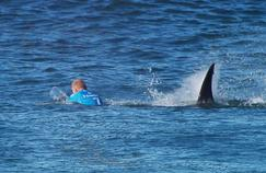 Mick Fanning en 2015, attaqué par un requin de trois mètres de long.
