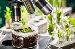 Ressources renouvelables, plantes, bois, algues et déchets végétaux prennent peu à peu leur place dans la fabrication de détergents, cosmétiques, peintures et autres matériaux pour l'aéronautique ou la plasturgie.