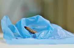 La larve du Galleria mellonella serait capable de ne faire qu'une bouchée du polyéthylène (PE) qui compose des sacs en plastique.