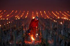 Bordeaux, Bourgogne, Alsace, Languedoc: le vignoble meurtri par le gel