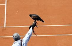 Ludwig Verschatse et un de ses rapaces sur les courts de Roland-Garros