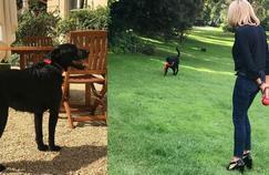 Un nouveau chien à l'Elysée : Nemo, adopté par les Macron à la SPA