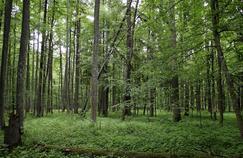 Forêt de Bialowieza : Varsovie menacée de lourdes sanctions financières