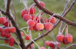 Préparez votre jardin à affronter l'hiver