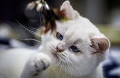 Scotland Yard sur la piste d'un tueur en série de chats