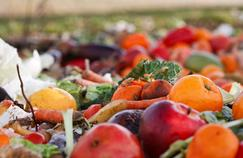 Comment «sauver» un compost infesté de mildiou ?