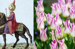 Histoire de plantes: la Hollande en proie à la «tulipomania»