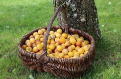 Pourquoi vous prenez-vous des «prunes» ?